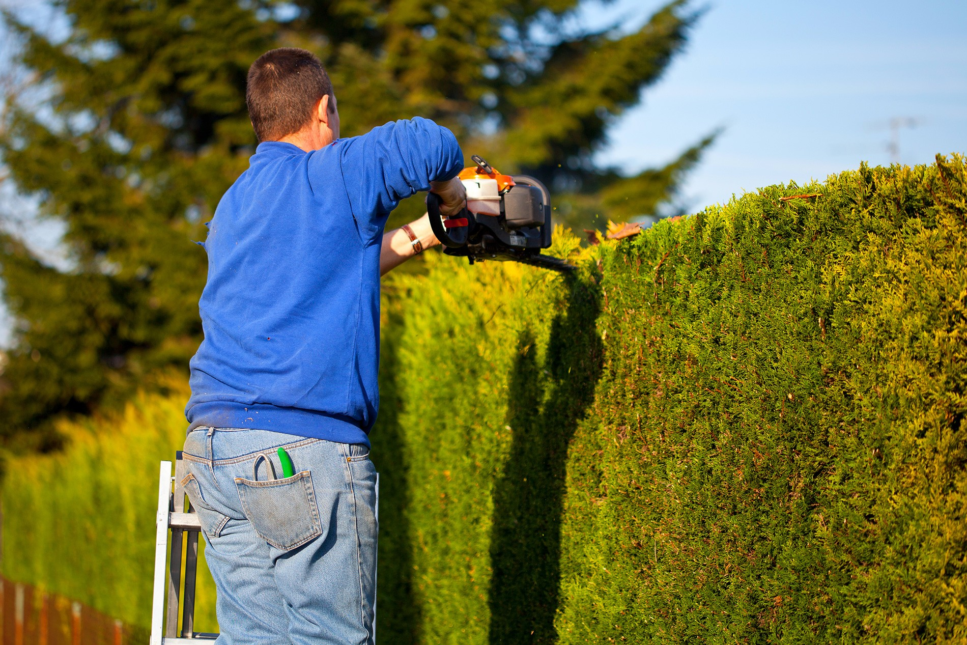 Trouver Un Jardinier A Domicile engager un jardinier professionnel › trouve un service