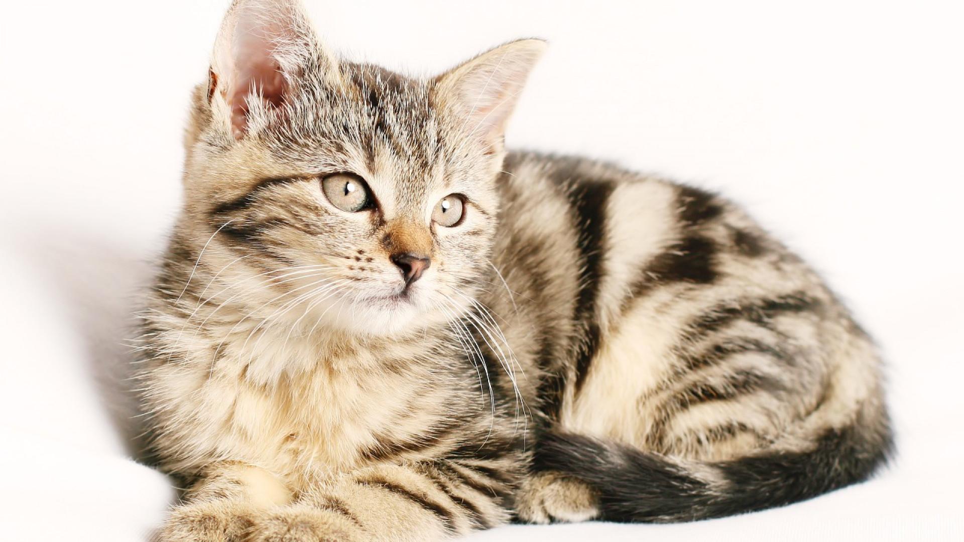 Comment éliminer les tiques sur son chat ?